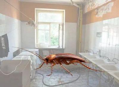 Уничтожение тараканов Лыткарино
